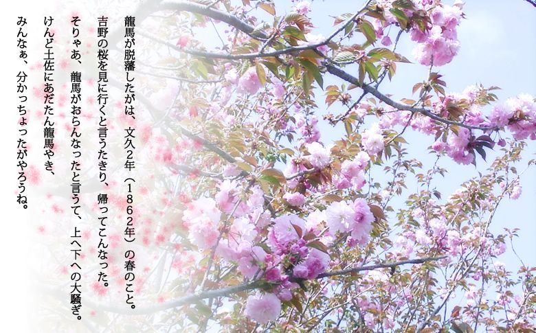 龍馬が脱藩したがは、文久2年(1862年)の春のこと。吉野の桜を見に行くと言うたきり、帰ってこんなった。
